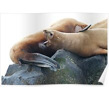 Sea Lion Baby Poster
