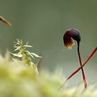 Moss tug of war by photontrappist