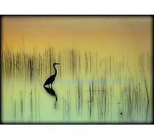 Morning on The Lake Photographic Print
