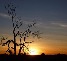 Australian Outback Sunset by acolleau