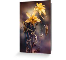 Yellow columbine flowers  Greeting Card
