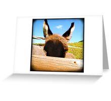 Peeking donkey Greeting Card