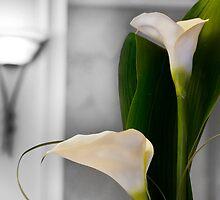 Lilies by Derek Brown