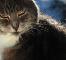 Winter cat Sticker