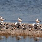 Seagull Island!!! by Larry Trupp