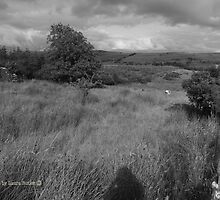 Summer Evening Shadow - County Donegal Landscape. by Laura Butler