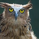 The Intense Yellow-eyed Stare by byronbackyard