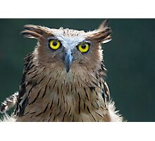 The Intense Yellow-eyed Stare Photographic Print