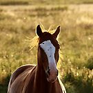 21.8.2015: Horse on Pasture at Summer Evening I by Petri Volanen