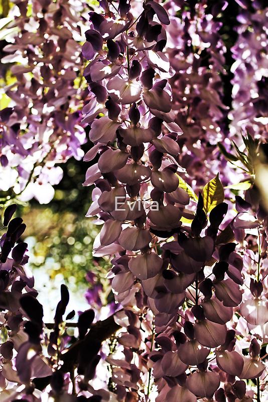 Beauty In Purple by Evita