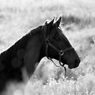21.8.2015: Horse on Pasture at Summer Evening II by Petri Volanen