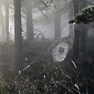 21.8.2015: Cobweb in the Misty Forest by Petri Volanen