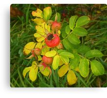 Autumn Rose Hips Canvas Print