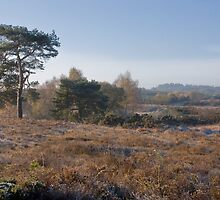 Holt Heath by Jennifer Bradford