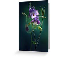 Dark violet columbine flowers Greeting Card