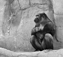 Contemplative Gorilla. by Usha Ganesh