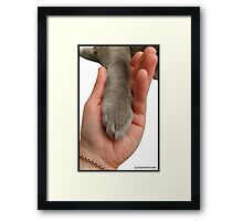 Cat Paw In Hand Framed Print