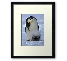 Emperor Penguin and Chick Framed Print