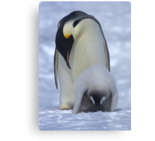 Emperor Penguin and Chick Metal Print