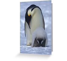 Emperor Penguin and Chick Greeting Card