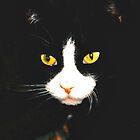 Hypnot-eyes! by Skeee