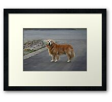 Waiting Patiently! Framed Print