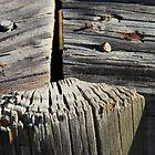 Beach Wood III by gcdepiazzi