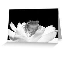 Gardenia Treefrog Greeting Card
