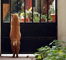 Garfield by huto
