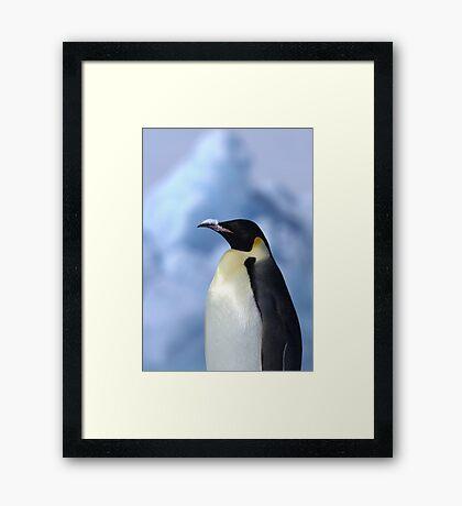 Snow Hill Penguin Framed Print