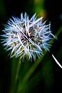 Wish upon a Dandelion by Renee Hubbard Fine Art Photography