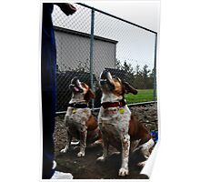 Bulldoggles Poster