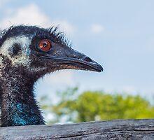 The Emu by Sherry V. Smith Fine Art Photography