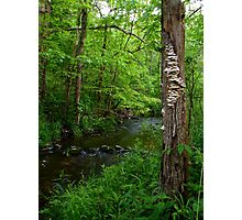 Stream of Thought Photographic Print