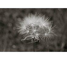 pins n needles Photographic Print