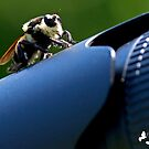 Bee Hunter (I'm going to sit right here so you can't take my pic) by TJ Baccari Photography