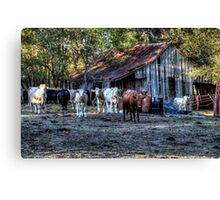 Hay! Have You Herd ... Canvas Print