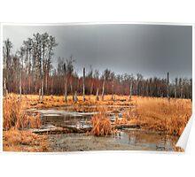 Elk Island marshlands (HDR) Poster
