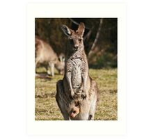 Kangaroo & Joey Art Print