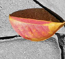 A Single Fallen Leaf by Caren