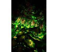 Leaves by Night Photographic Print