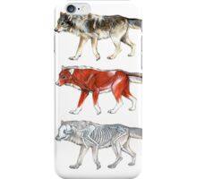 Anatomy of a Wolf iPhone Case/Skin