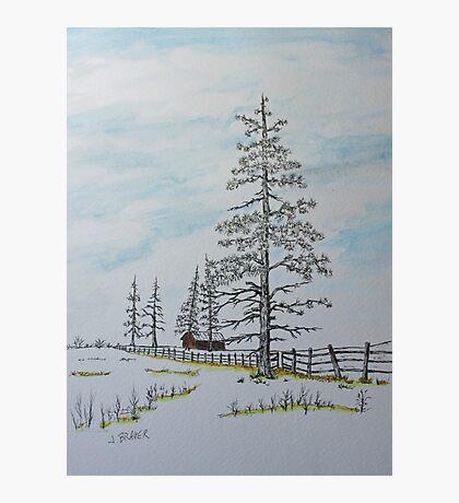Pine Tree Gate Photographic Print