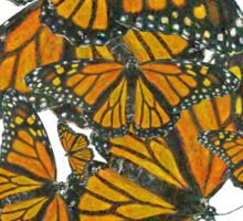 Monarch Butterflies - Migration Sticker
