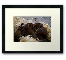 Dwarf Mongoose Framed Print