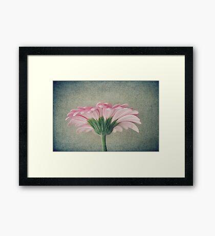 Flat Pink Gerbera Textured Framed Print