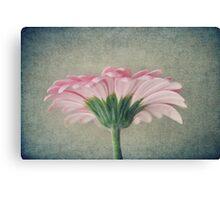 Flat Pink Gerbera Textured Canvas Print