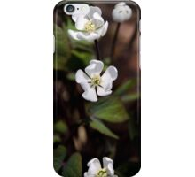 Anemone Flowers iPhone Case/Skin