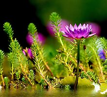 A Little Bit of Nature by Photography by TJ Baccari