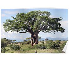 Hole in the Baobab Tree Poster